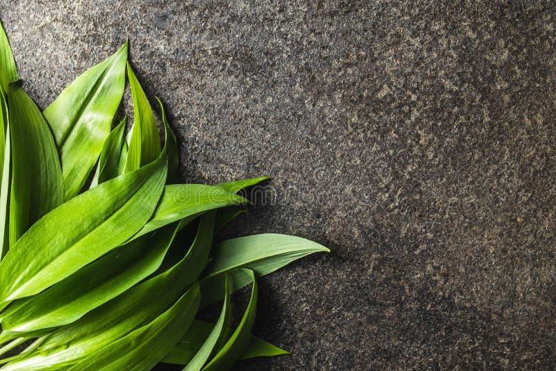 Gröna blad av vilda vitlök arkivfoton