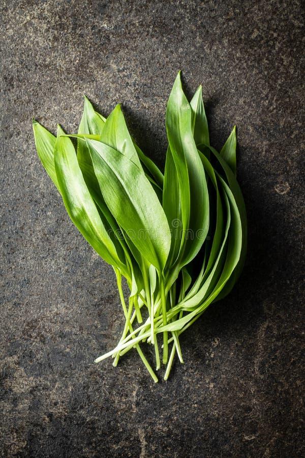 Gröna blad av vilda vitlök fotografering för bildbyråer
