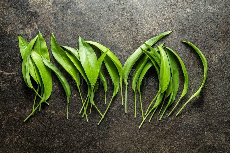 Gröna blad av vilda vitlök royaltyfria bilder