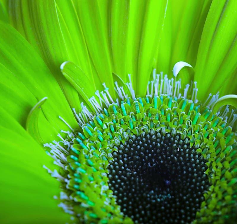 Download Gröna blommor arkivfoto. Bild av färg, petal, green, blomma - 27282078