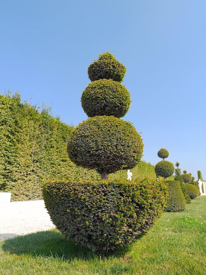 Gröna buskar arkivbild