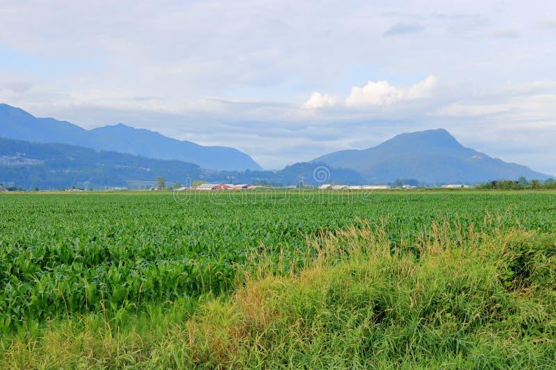Gröna Cropland i en bred öppen dal arkivbilder