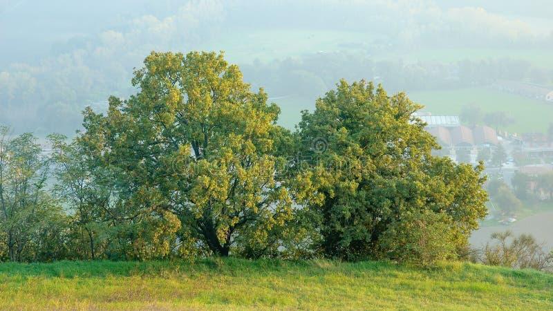 Gröna ekar på kullarna arkivbild
