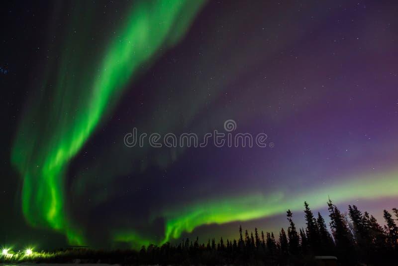 Gröna exponeringar i stjärnklar himmel, i botten av ramsvartträd arkivfoto