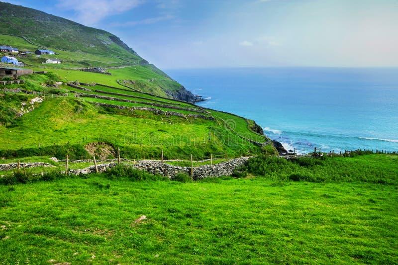 Gröna fält längs kust- drev för Slea huvud, Dinglehalvö, ståndsmässiga Kerry, Irland arkivfoton