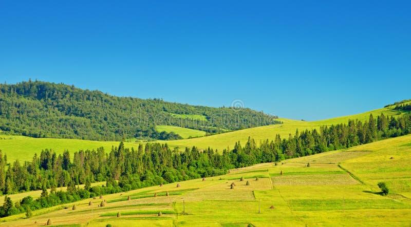 Download Gröna fält på kullar fotografering för bildbyråer. Bild av högt - 27280213