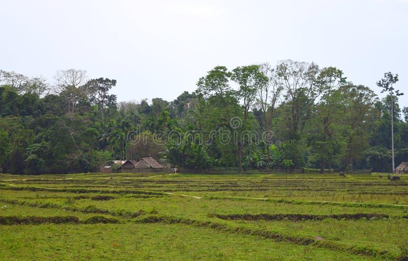 Gröna fält, träd och avlägsna stam- kojor - ett landskap på den Baratang ön, Andaman Nicobar, Indien fotografering för bildbyråer