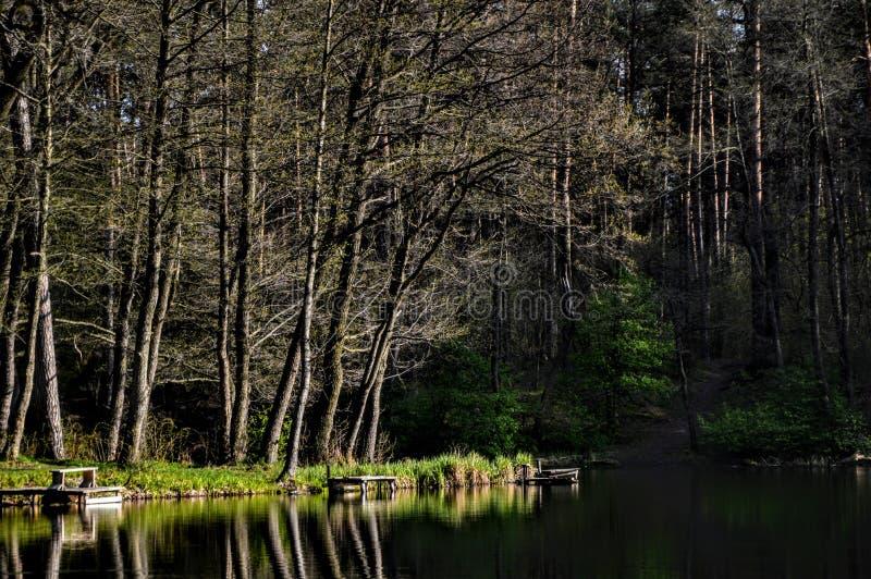 Gröna för och sjö royaltyfri bild