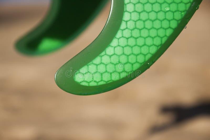 Gröna fena på stranden arkivfoto