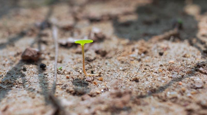 Gröna forsar i sanden, i sommarbygden Sanden under den varma solen reflekterar ljuset Små gröna forsar, arkivfoto