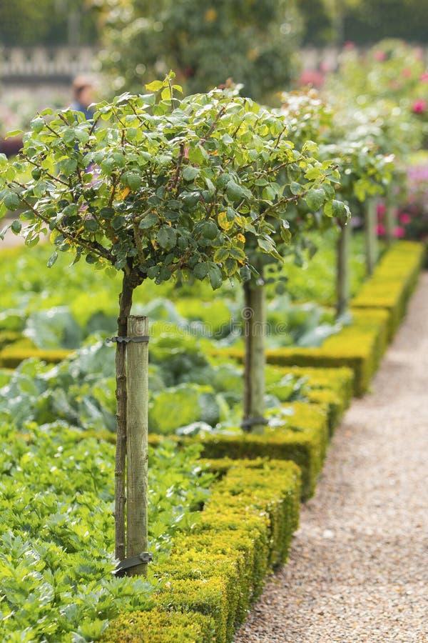 Gröna fruktträd i en fransk grönsakträdgård i Chateau de Villandry, Loire Valley royaltyfria foton