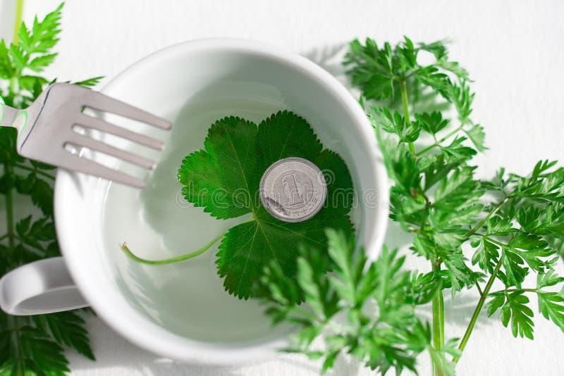 Gröna graas och mynt och lugnt vatten royaltyfri fotografi