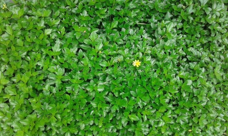 Gröna härliga små växter fotografering för bildbyråer