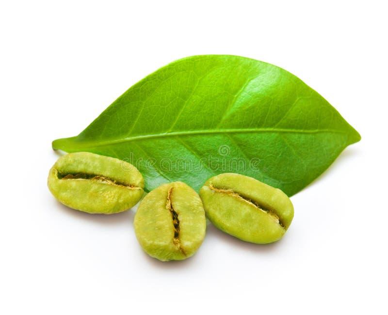 Gröna kaffebönor fotografering för bildbyråer