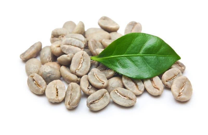 Gröna kaffebönor arkivbilder