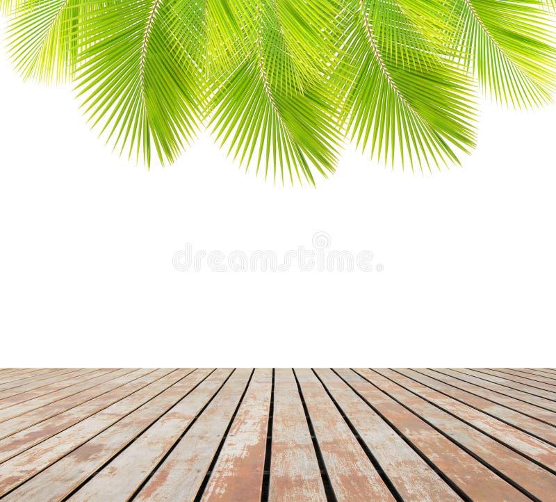 Gröna kokosnötsidor över trägolv royaltyfri fotografi