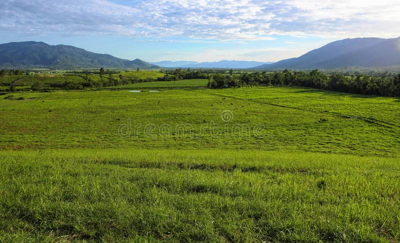 gröna kopaddockar i Tully North Queensland royaltyfria bilder