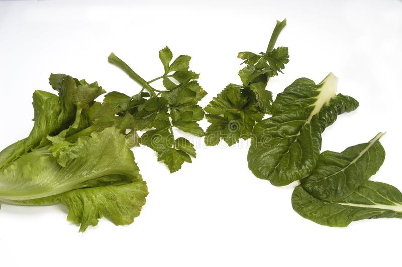 gröna lövrika grönsaker arkivfoton