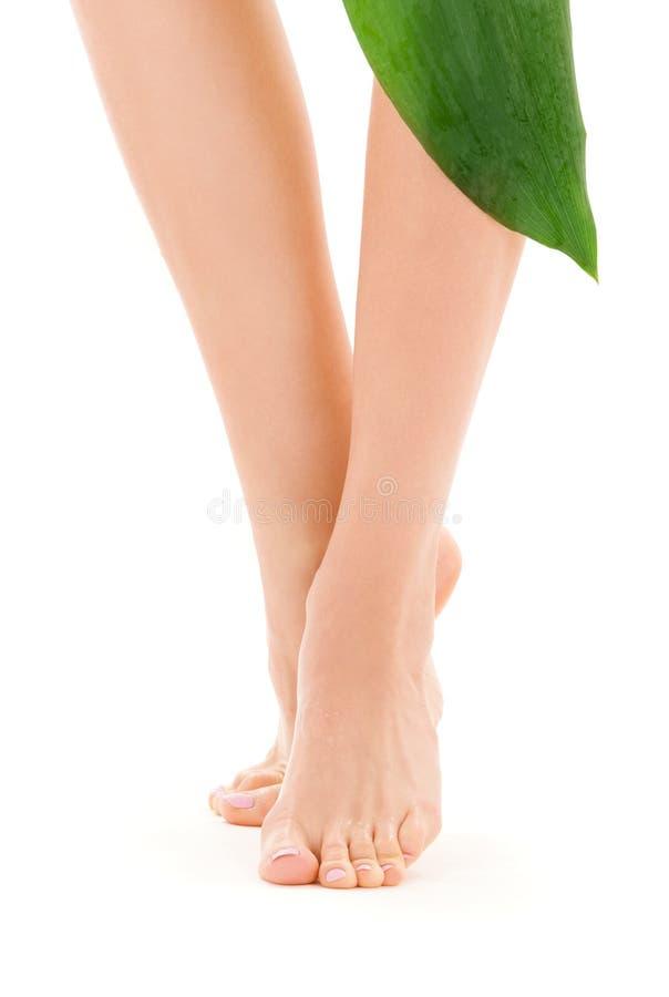 gröna leafben för kvinnlig royaltyfri bild