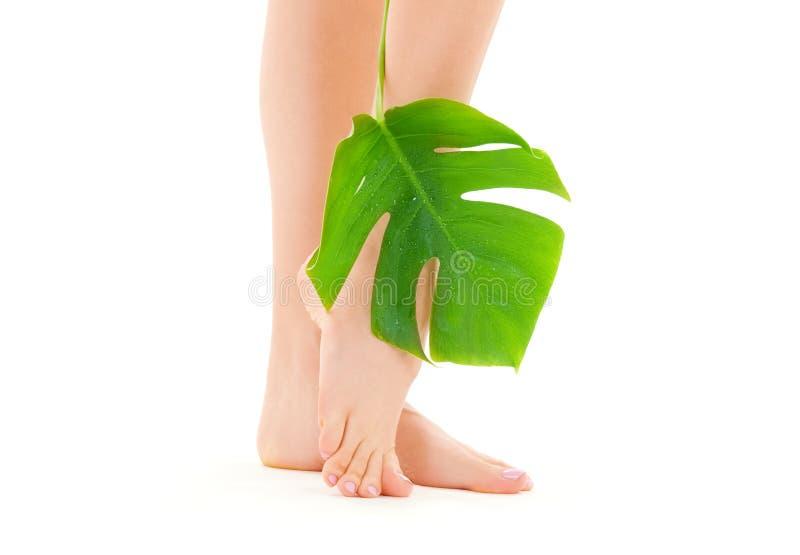 gröna leafben för kvinnlig arkivbilder