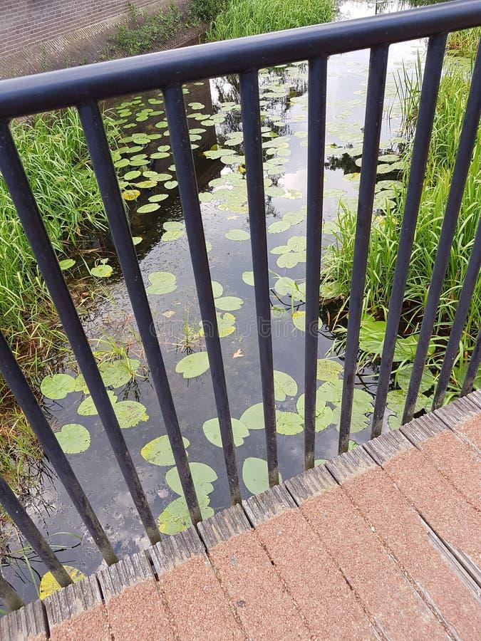 Gröna liljor och gräs i vattnet royaltyfri fotografi