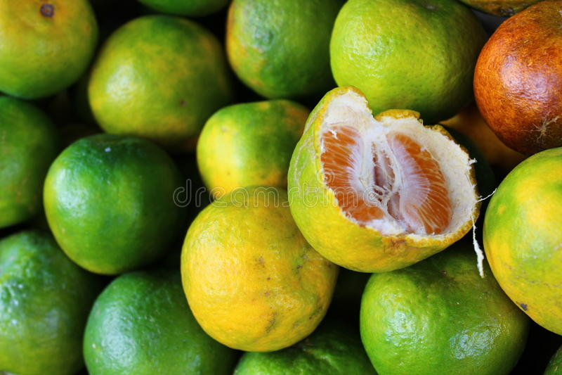 Gröna mogna apelsiner som är klara att ätas royaltyfri fotografi