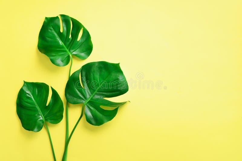 Gröna monsterasidor på gul bakgrund med kopieringsutrymme Top beskådar Minsta design exotisk växt Idérik sommarlägenhet royaltyfria bilder