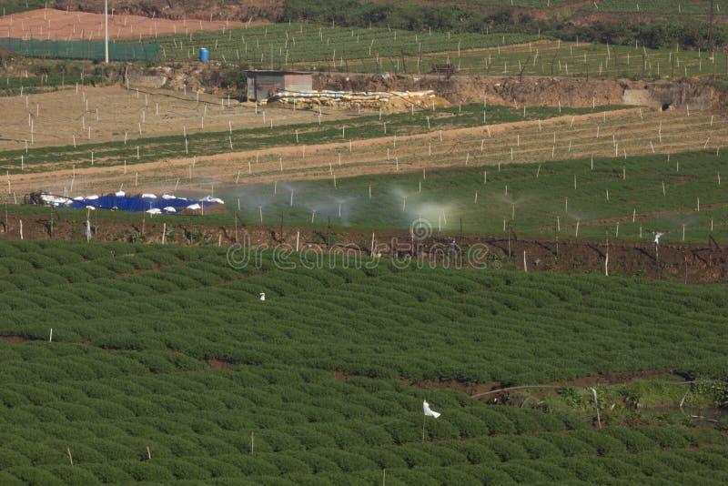 Gröna morotfält som i rad planteras, bevattnat genom att använda sprinkleranläggningen i Ooty, Indien arkivbilder