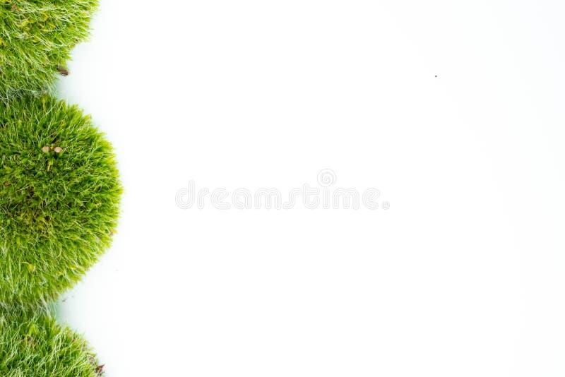 Gröna mossor på vit royaltyfri foto