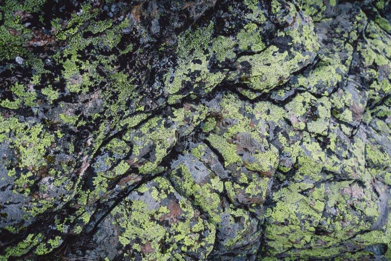 gröna mossrocks naturlig textur arkivfoton