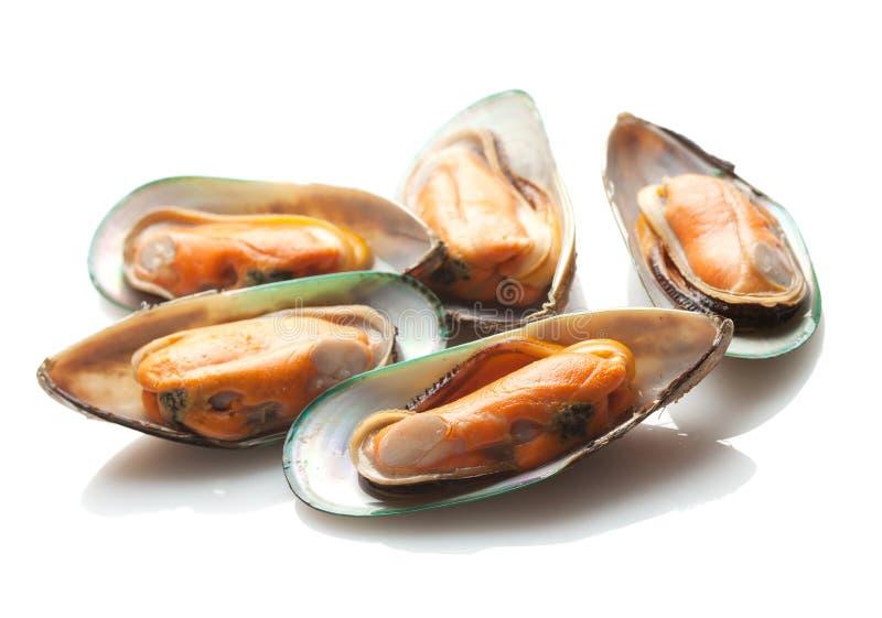 gröna musslor New Zealand fotografering för bildbyråer