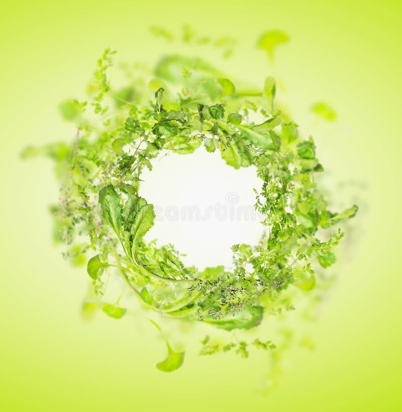Gröna nya örter på vit träbakgrund, ram royaltyfria bilder