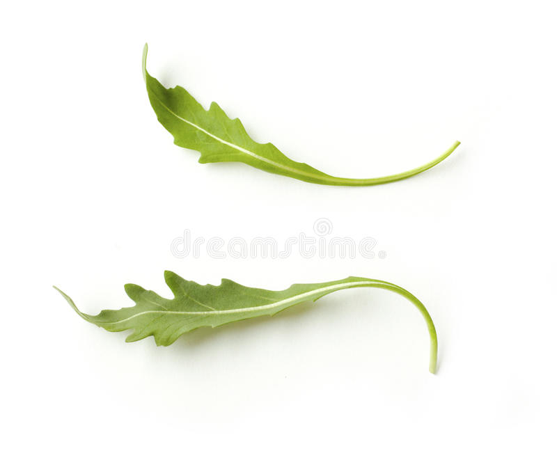 Gröna nya rucolasidor som isoleras på vit bakgrund arkivfoton