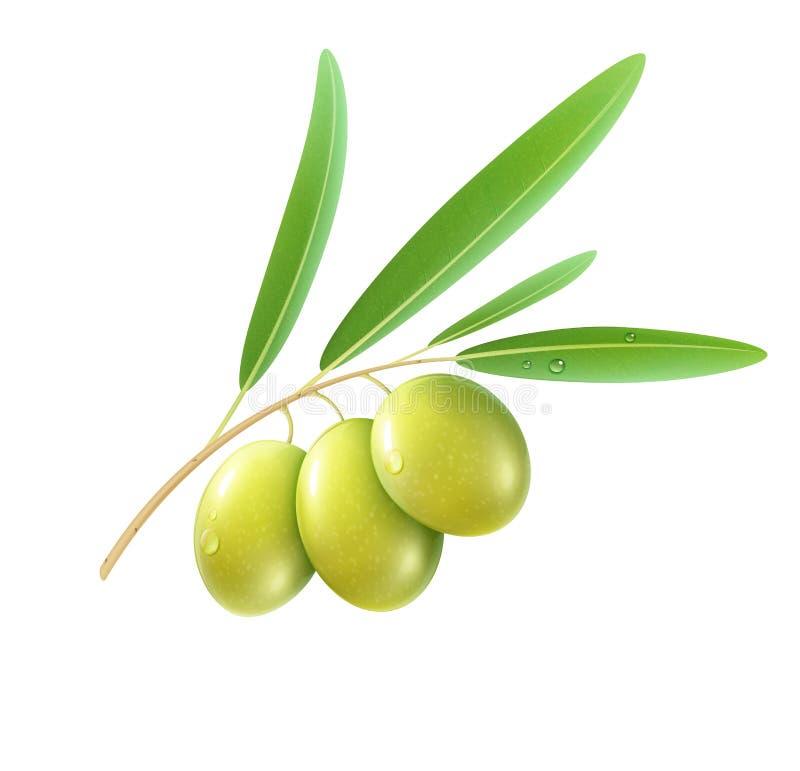 Download Gröna olivgrön vektor illustrationer. Illustration av organiskt - 27288098
