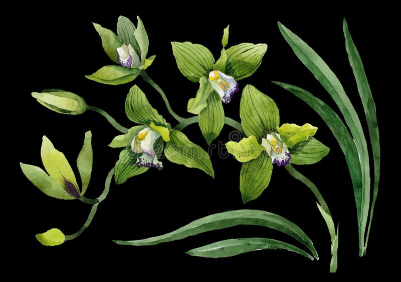 Gröna orkidéblommor för vattenfärg Blom- botanisk blomma Isolerad illustrationbeståndsdel royaltyfri foto