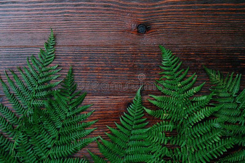 Gröna ormbunkesidor på brun träbakgrund royaltyfria foton
