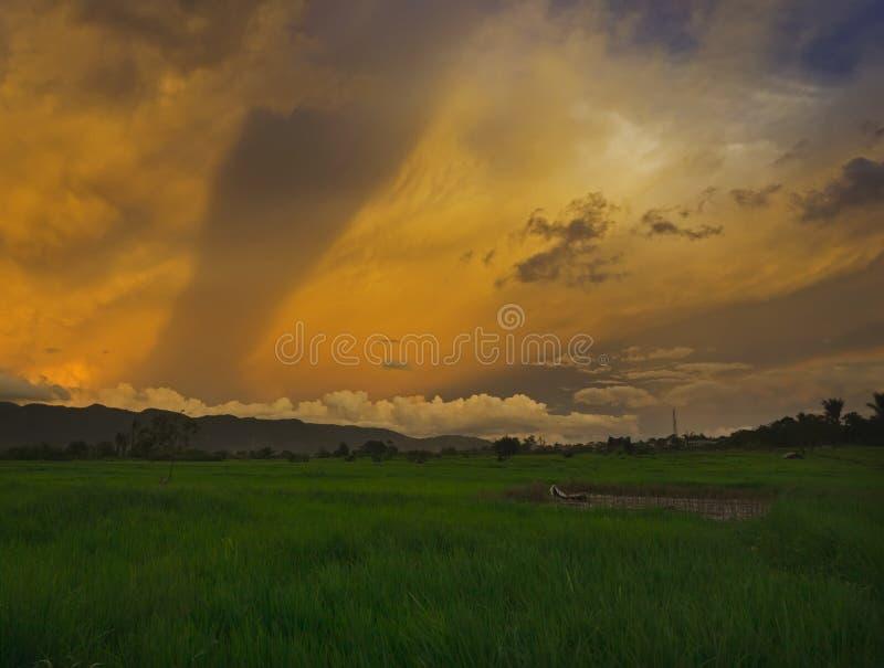Gröna Paddy Field och guld- himmel arkivbilder