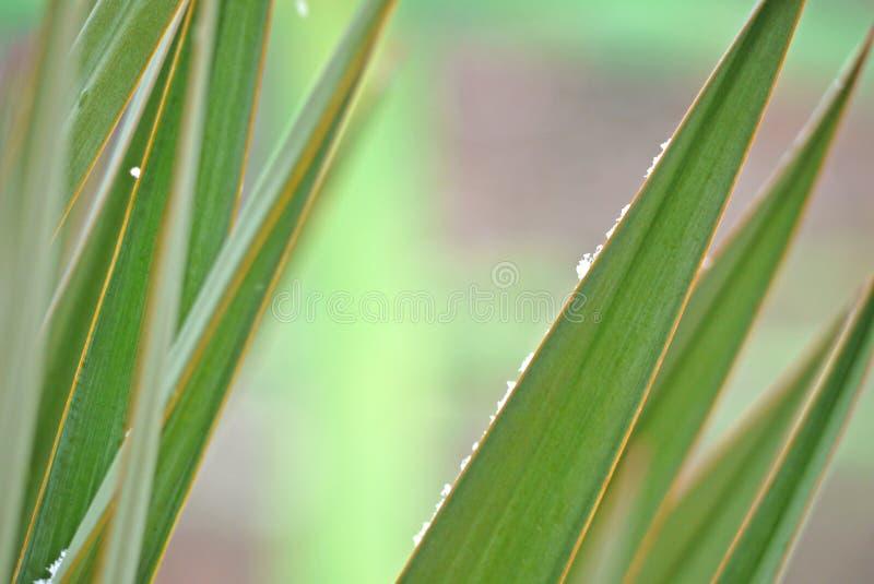 Gröna palmliljaväxtsidor med små snöflingor på pastellfärgad bakgrund arkivbilder