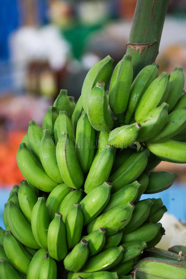 gröna plantains royaltyfri foto