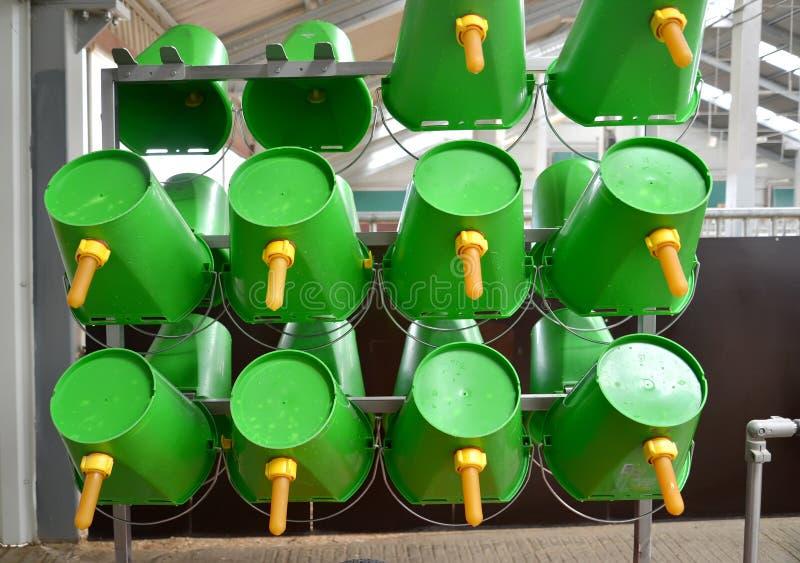 Gröna plast- hinkar med nipplar för matning av calfs forntida skapade traditioner f?r turister f?r mejerilantg?rdnational fungera royaltyfria foton