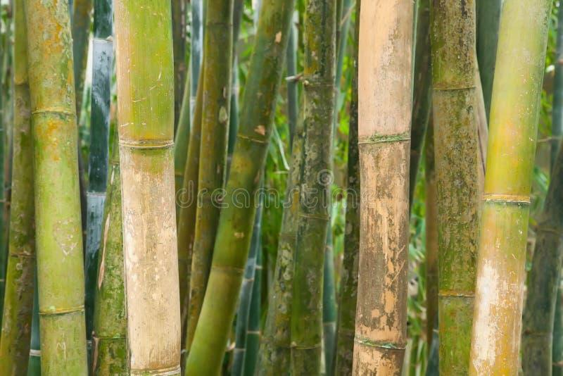 gröna poler för bambu arkivbild