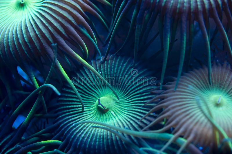gröna polyps royaltyfri bild