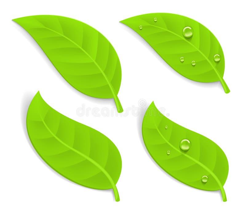 Gröna realistiska sidor vektor illustrationer