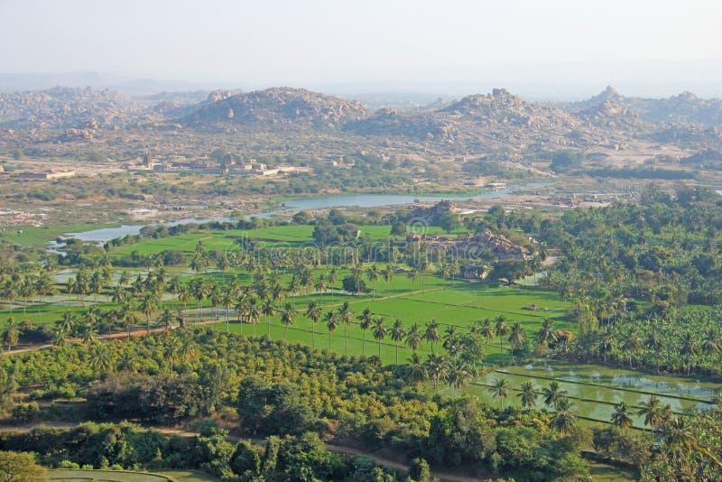 Gröna risfält, gömma i handflatan och floden Tungabhadra i byn av Hampi Palmträd solen, risfält Tropiskt exotiskt royaltyfria bilder