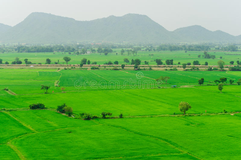Gröna risfält i nordlig Skotska högländerna av Thailand royaltyfri foto