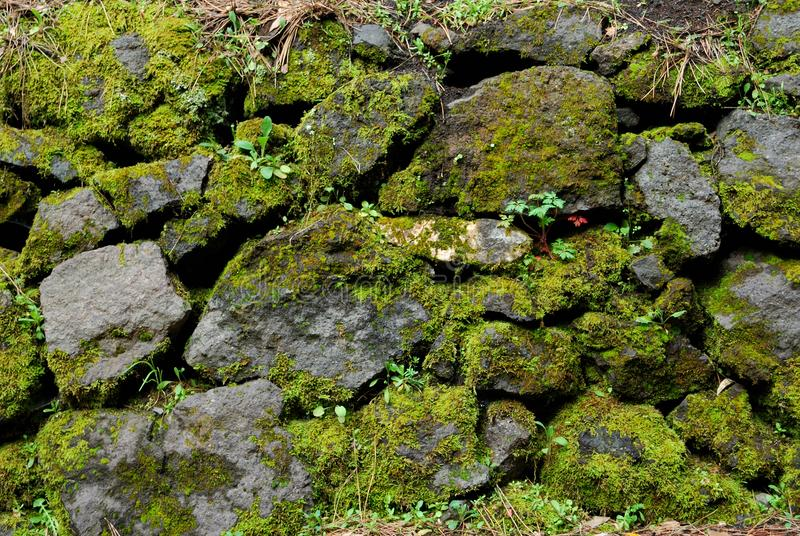 gröna rocks royaltyfria foton