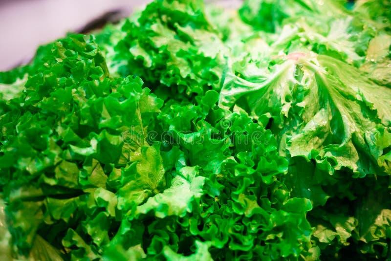Gröna sidor av en sallad royaltyfria foton