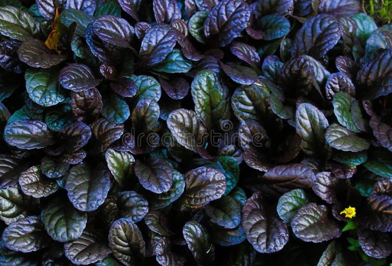 Gröna sidor av lövrika växter royaltyfria foton