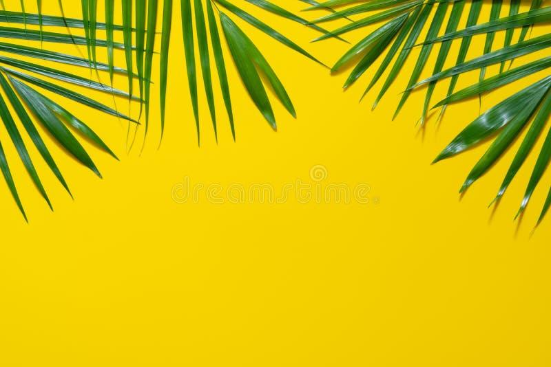 Gröna sidor av palmträdet på gul bakgrund Plan lekmanna- minsta naturstil av tropiska palmblad på gul bakgrund royaltyfri fotografi