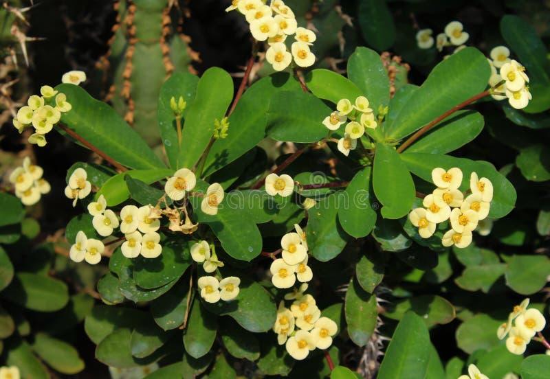 Gröna sidor av växter med gula blommor fotografering för bildbyråer